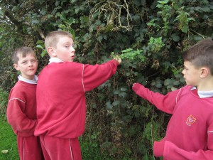"This year we were learning the poem ""Blackberry Picking"